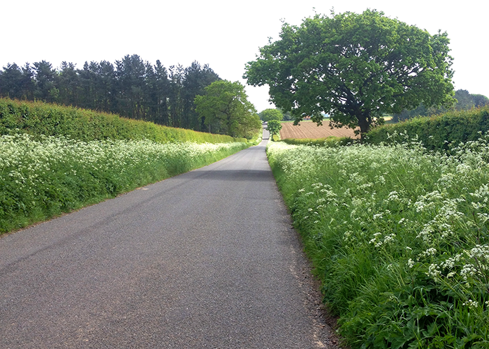 Straight Tarmac road on the Peddars Way, Norfolk, UK