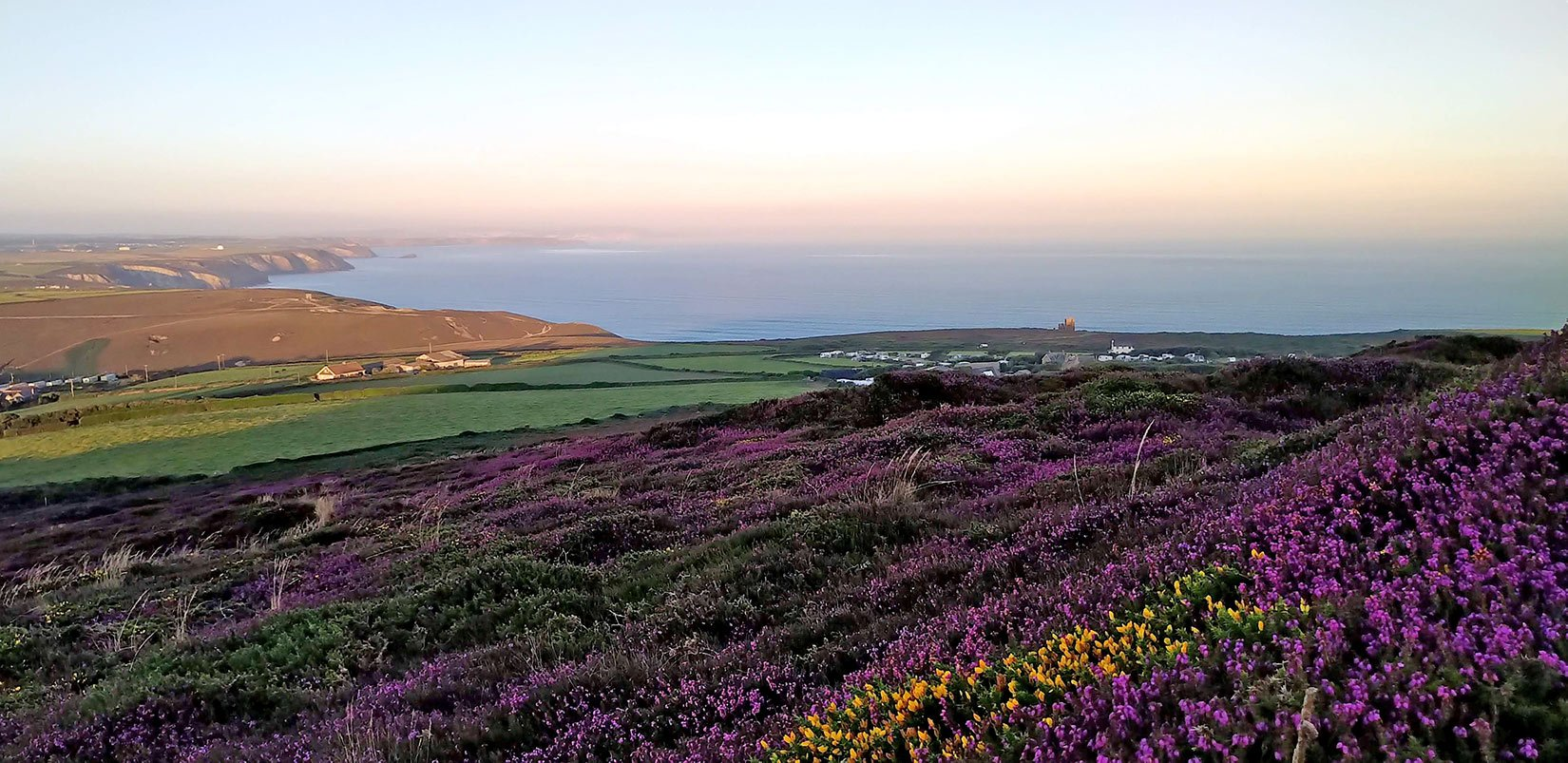 A view across heather to the sea before the day heats up